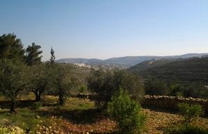 Nouvelles de Palestine et d'Israël Th_115970942_Israel_Photo_5_768x493_122_454lo